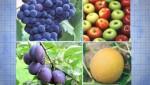 Фрукты и овощи обработанные пестицидами